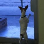 Lilla at door window